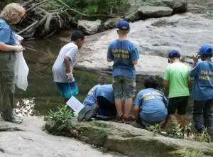 Scouts Looking for fish in the Little Paint Branch River