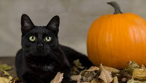 Kitty Post October 2020: Beware Black Cats, It's Halloween! By Sallie Rhodes