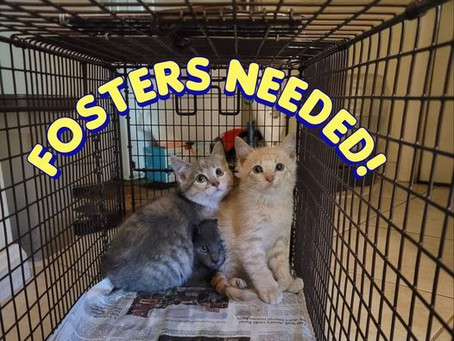 Kitty Post: The Joys of Fostering Kittens By Kathy Rodeffer
