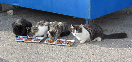 Kittie Post: Calling All People Who Feed Feral Cats