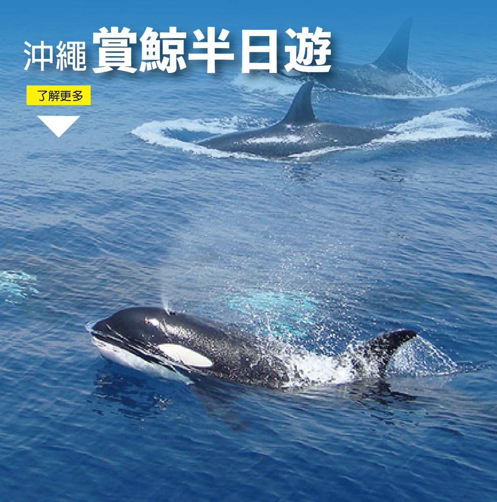 沖繩賞鯨半日遊-09.jpg