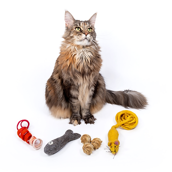 Mimis-Daughters--cat-box-toys-.png