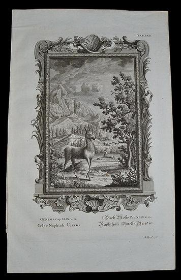 "Johann Jakob SCHEUCHZER (1672-1733) ,"" Physica Sacra "" , 1732"