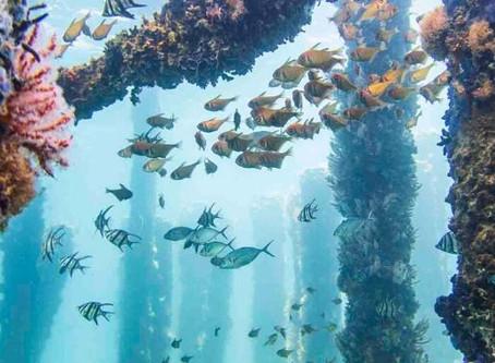 Experience Western Australia's Wonders Virtually