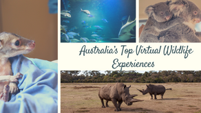 Australia's Top Virtual Wildlife Experiences