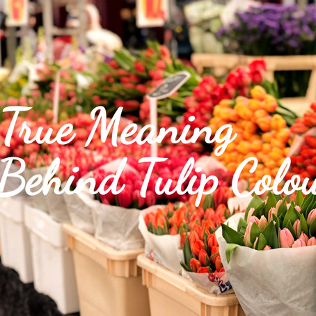 The Meaning Behind Each Tulip Colour