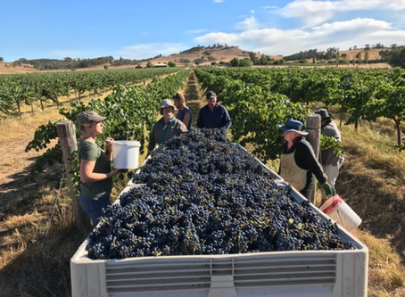 Top Biodynamic Wineries in New South Wales