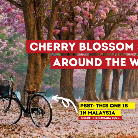 Top Spots for Cherry Blossom Viewing  All Around the World