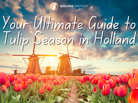 Your Ultimate Guide to Tulip Season in Holland