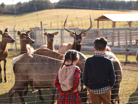Uxbridge Christmas Photos at the Reindeer Farm!