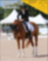 horse wheelchair equestrian