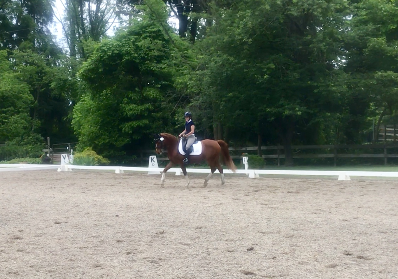 dressage horse equestrian
