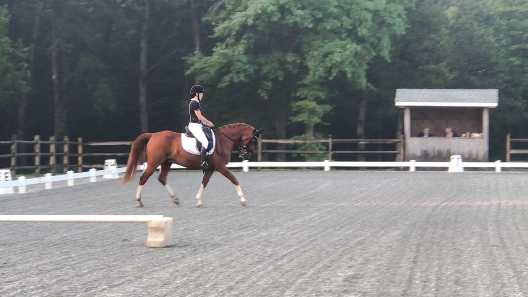 dressage rider paralysis horses