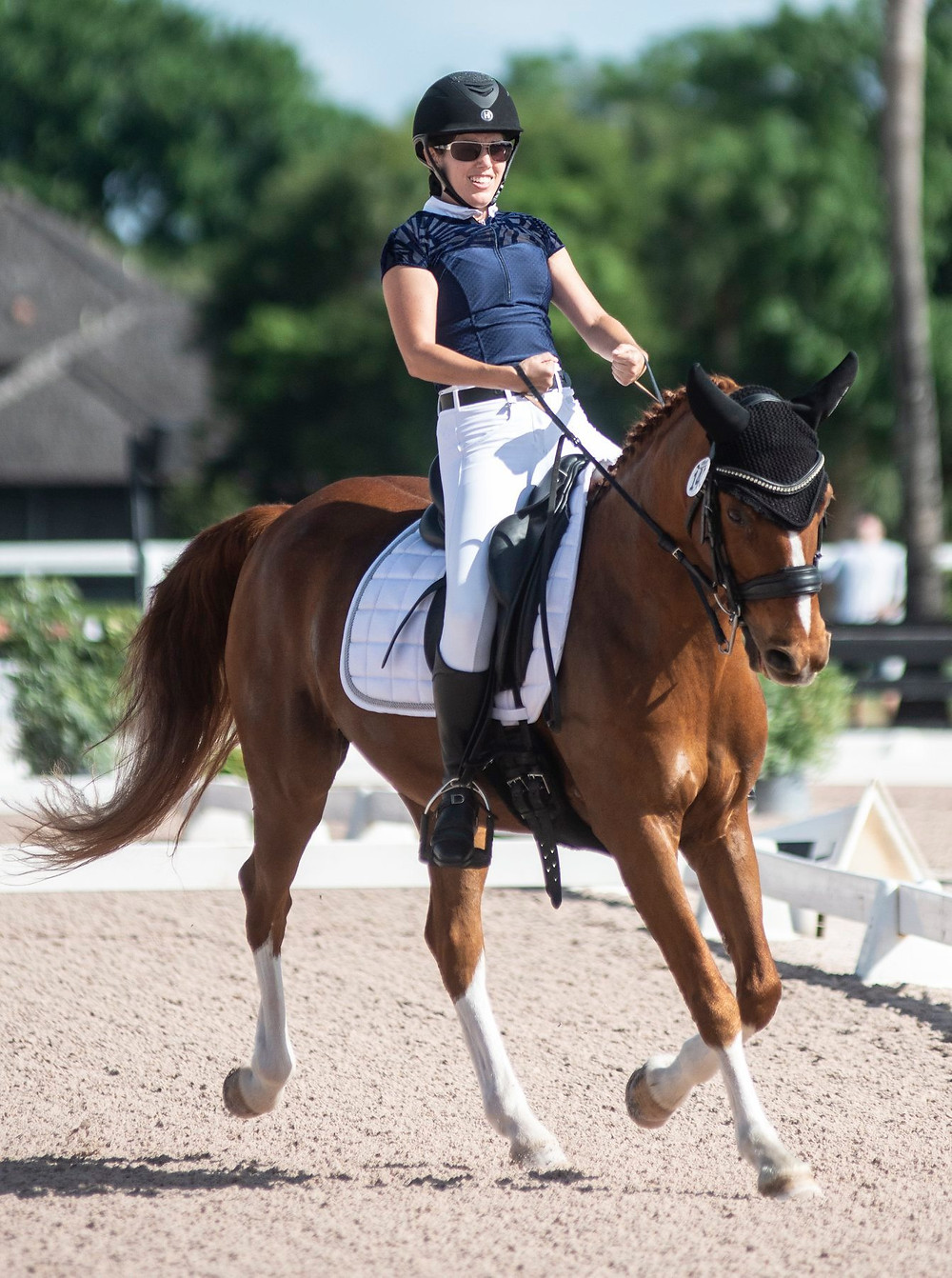 ParaEquestrian dressage horse