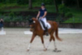 Equestrian riding dressage horse. Paraequestrian and Paradressage athlete.