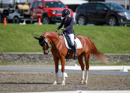 Equestrian riding dressage horse. Paraequestrian and Paradressage athlete.