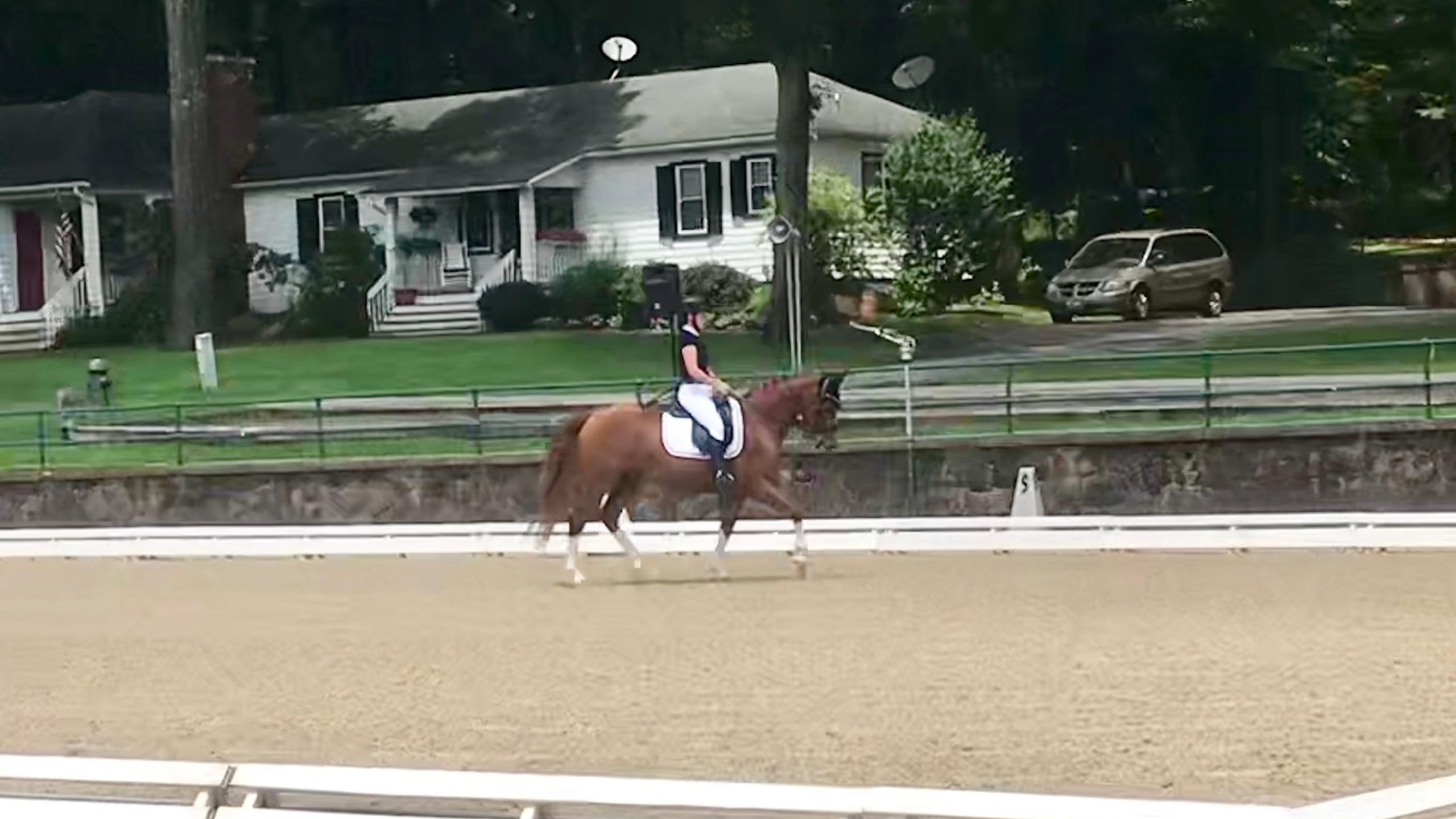 equestrian rider horse paralympics