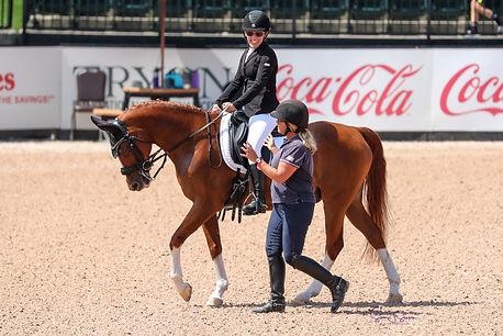 equestrian wheelchair horses