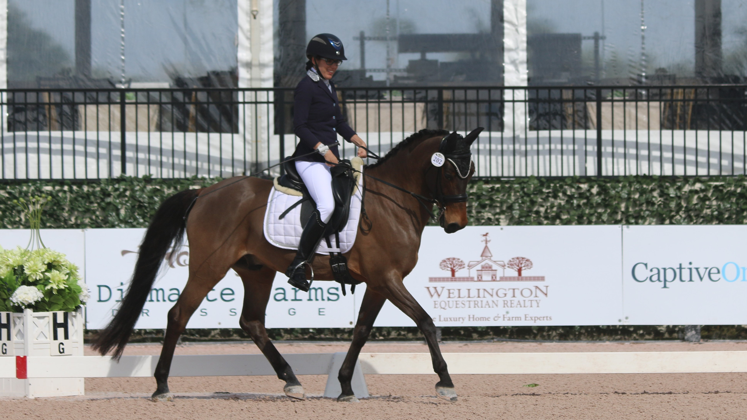 Girl in wheelchair riding dressage horse. Paradressage and paraequestrian.