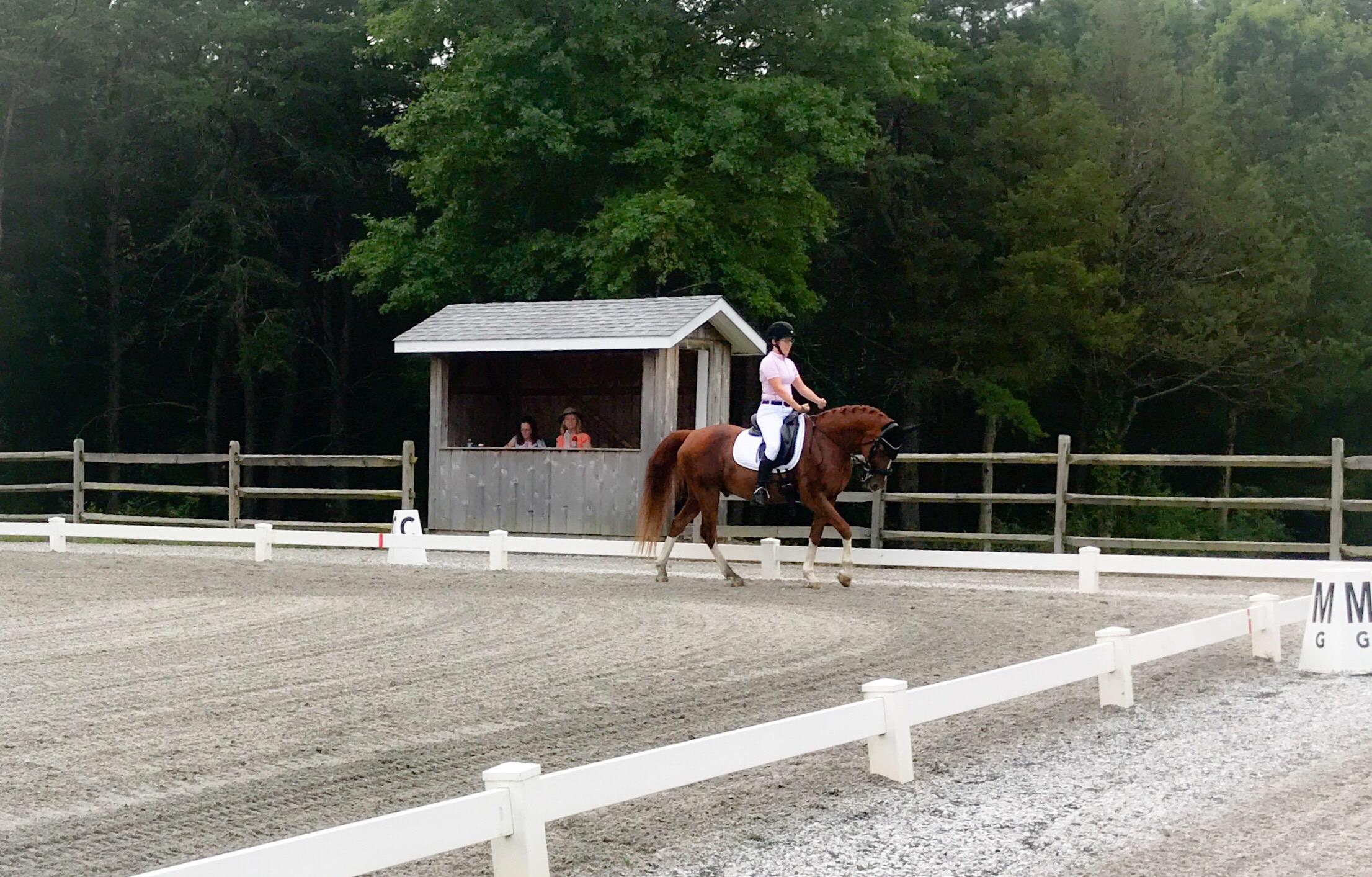 equestrian rider paralysis horse