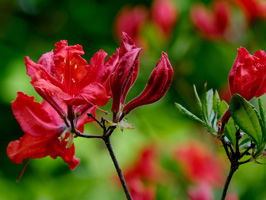 Icon-Blumen.jpg