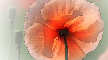 Ruediger-Blumen-19.jpg
