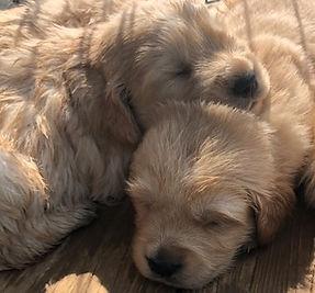 2 pups2.jpg