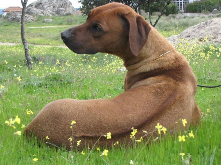 Winny AkR , Habeis visto que ridge mas precioso_  _)