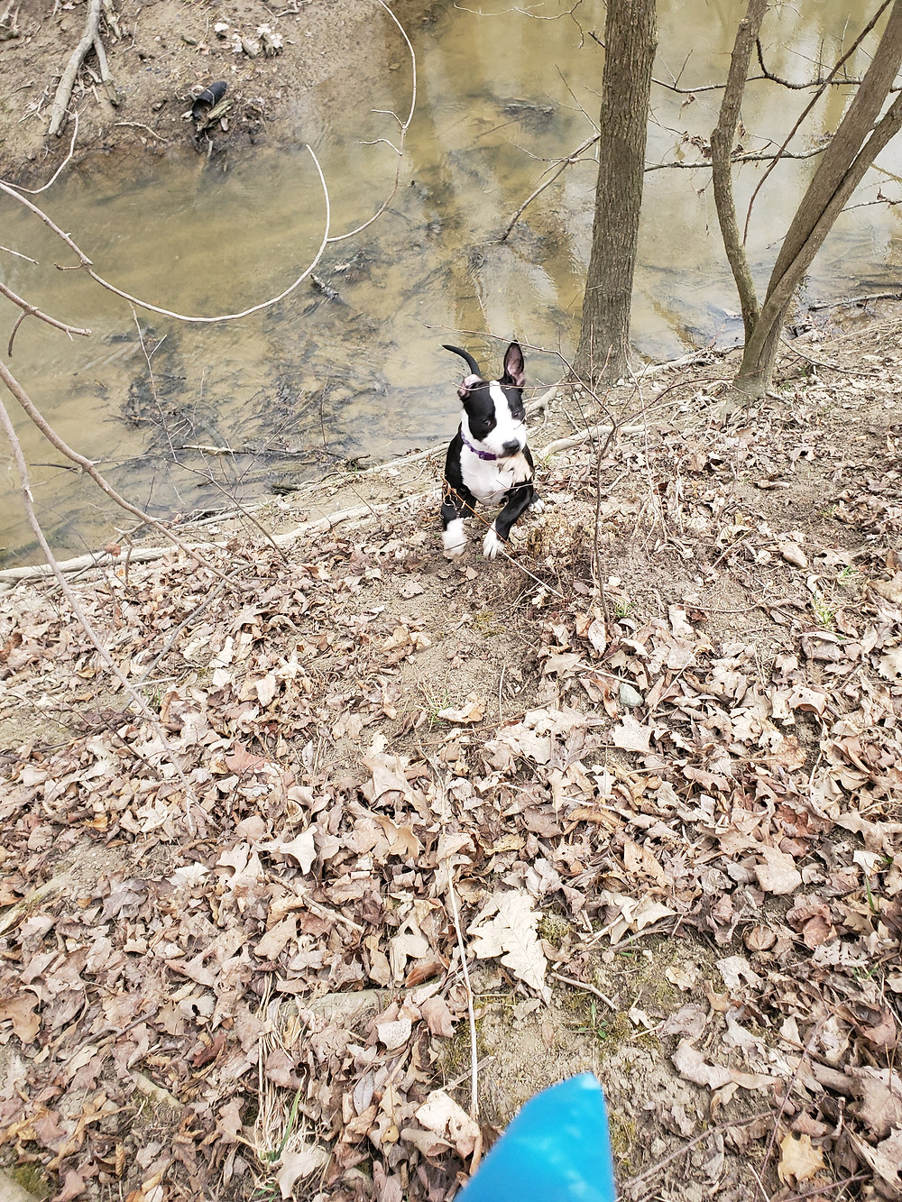 My dog running up the creek bank.