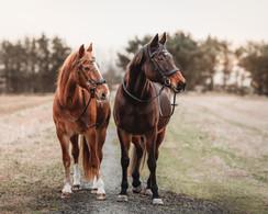 Portrett av to eldre hester. De står ved siden av hverandre og ser samme vei. Bilde tatt av Tina Brikland Borsheim, Studio Brikland