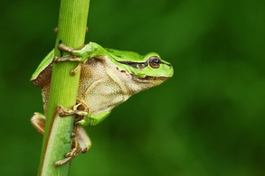 Animal Magic: The Frog and The Toad