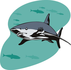 Animal Magic: The Shark