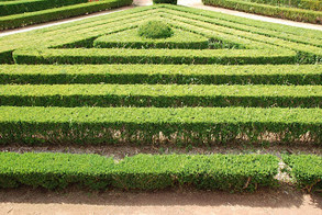 Meditation Prompt: Maze