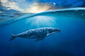 Animal Magic: The Whale