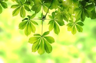 Colour Magic...GREEN