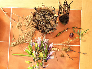 The Magic of Seeds