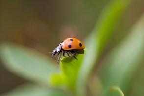 Animal Magic: Ladybird/ladybug