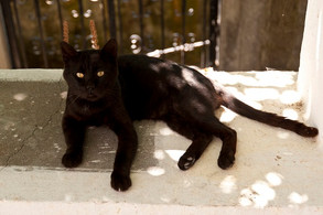 Animal Magic: The Cat