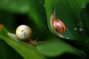 Animal Magic: The Snail