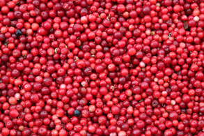 Magical Food - Cranberry