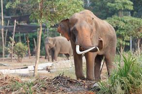 Animal Magic: The Elephant