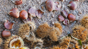 Magical Food - Chestnut