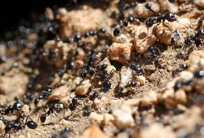 Animal Magic: The Ant