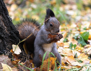 Animal Magic: The Squirrel