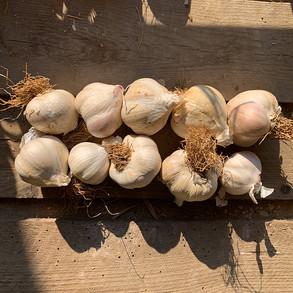 Review: The Garlic Farm