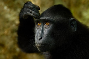 Animal Magic: The Monkey