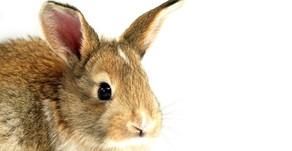 Animal Magic: The Rabbit and The Hare