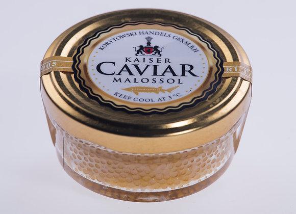 Kaviar vom Sterlet Albino / Acipenser ruthenus ALB