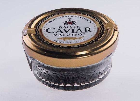 Kaviar vom Sterlet Stör / Acipenser ruthenus