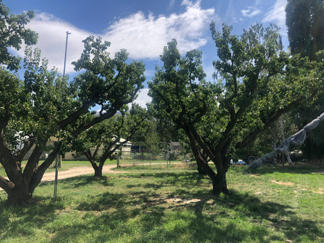 An Orchard Visit